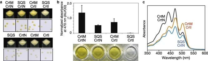 Construction of carotenoid biosynthetic pathways using