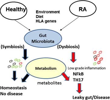 Xifaxan dysbiosis Aszcariasis fejlődési ciklus, Giardia se vede in scaun