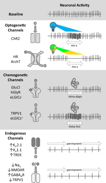 Changing channels in pain and epilepsy exploiting ion channel gene download high res image 295kb ccuart Gallery