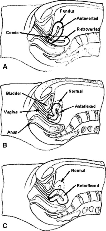 Evaluation of the embryo transfer protocol by a laboratory