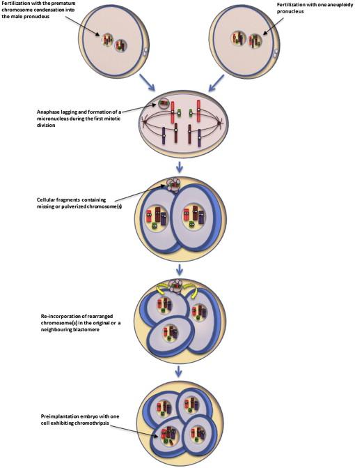 explain why meiosis and gametogenesis are always interlinked