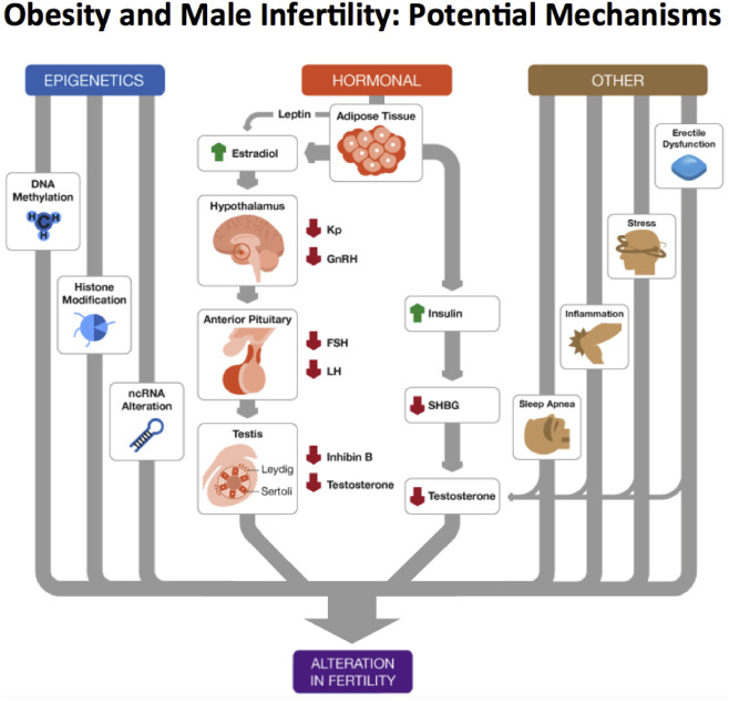 Prompt reply obesity statistics sperm for