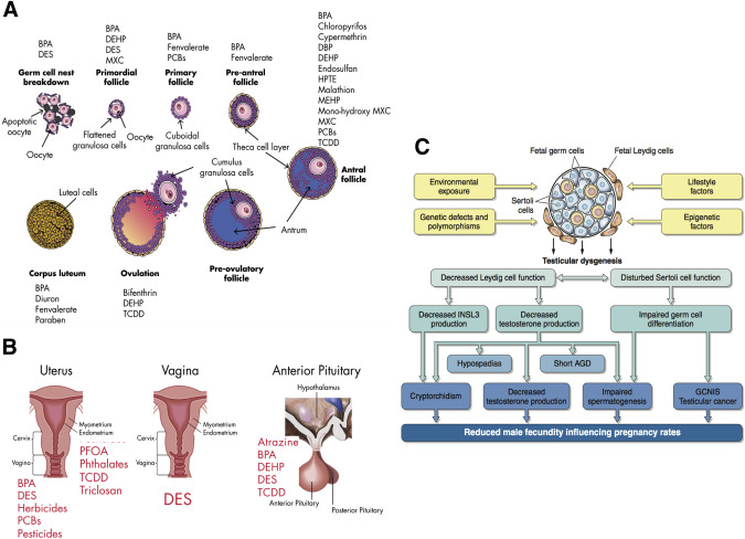 Forty years of IVF - ScienceDirect