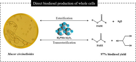 Biodiesel production from mucor circinelloides using ethanol and graphical abstract ccuart Gallery