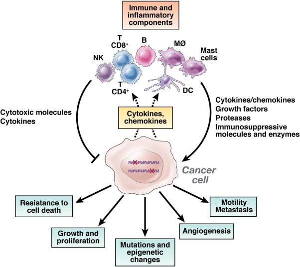 Inflammation And Colon Cancer Sciencedirect