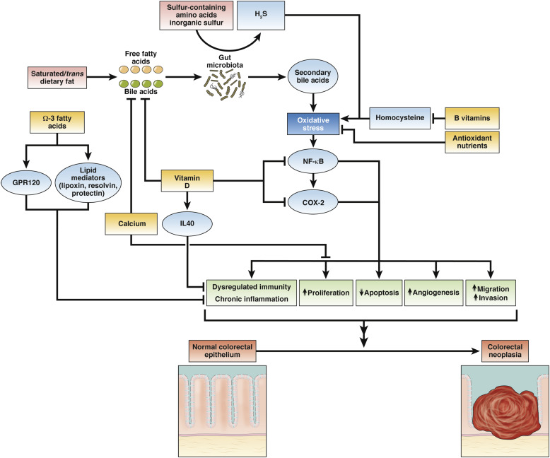 Nutrients Foods And Colorectal Cancer Prevention Sciencedirect