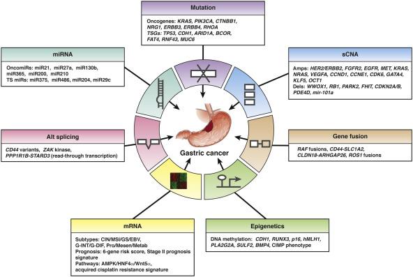 gastric cancer kras mutation