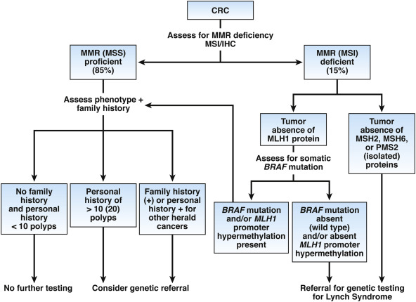 Genetics And Genetic Testing In Hereditary Colorectal Cancer Sciencedirect