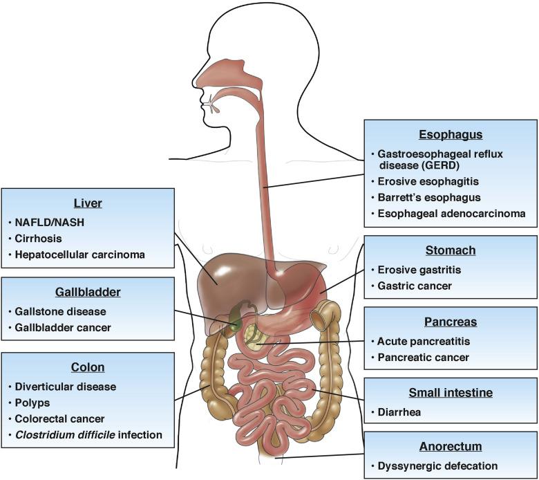 Großartig Hcc Anatomie Und Physiologie Ideen - Menschliche Anatomie ...