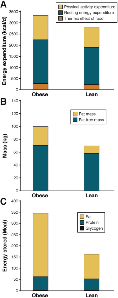 effect of diet on body fat composition