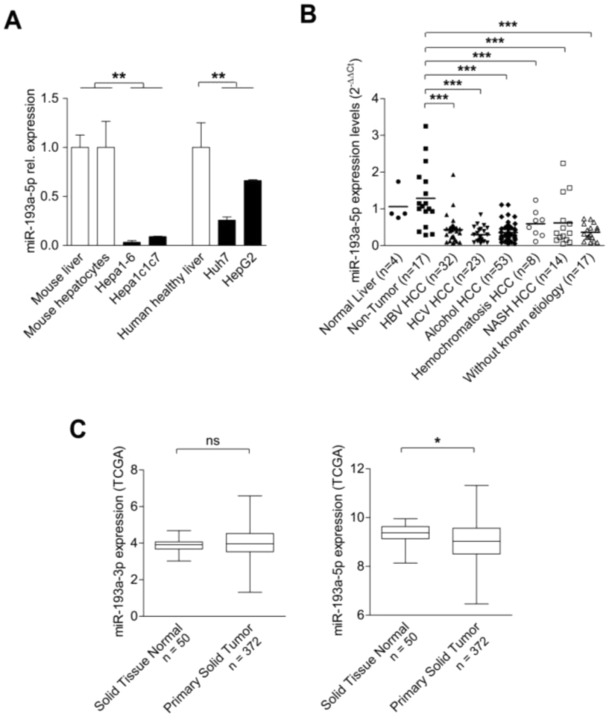 microRNA 193a-5p Regulates Levels of Nucleolar- and Spindle