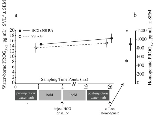 Validation of water-borne steroid hormones in a tropical