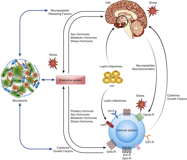The Clandestine Organs Of The Endocrine System Sciencedirect