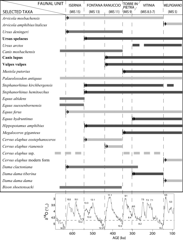 Biochronological framework for the late Galerian and early-middle