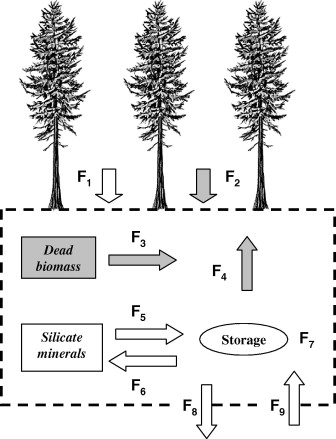 Modelling The Biogeochemical Cycle Of Silicon In Soils Application