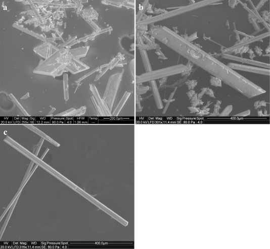 Calcium isotopic fractionation in microbially mediated