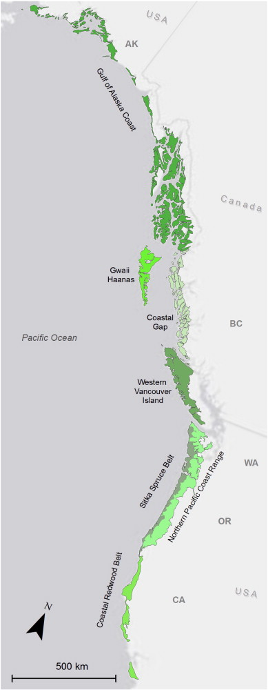 Soils of temperate rainforests of the North American Pacific Coast