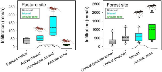 Good ant, bad ant? Soil engineering by ants in the Brazilian