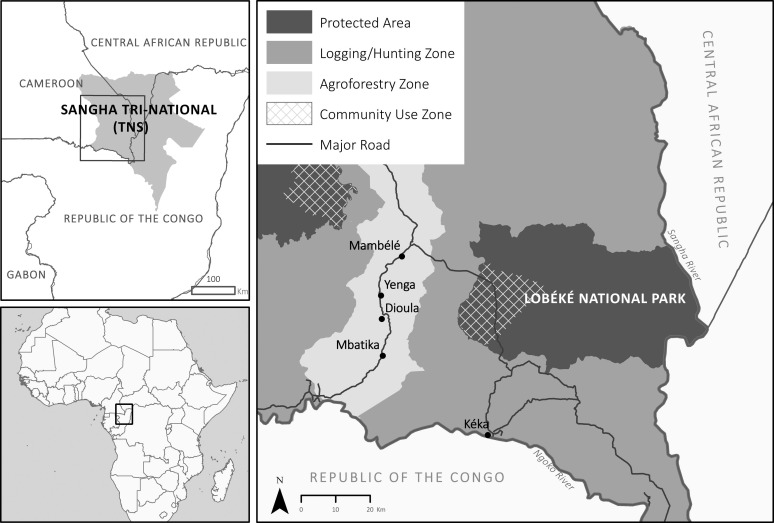 Producing hybrid forests in the Congo Basin: A political