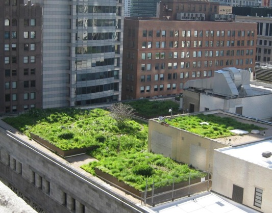 The Green Roof On Chicago S City Hall
