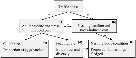 Effects of experimental chronic traffic noise exposure on