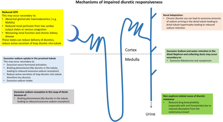 Decongestion Diuretics And Other Therapies For Hospitalized Heart Failure Sciencedirect