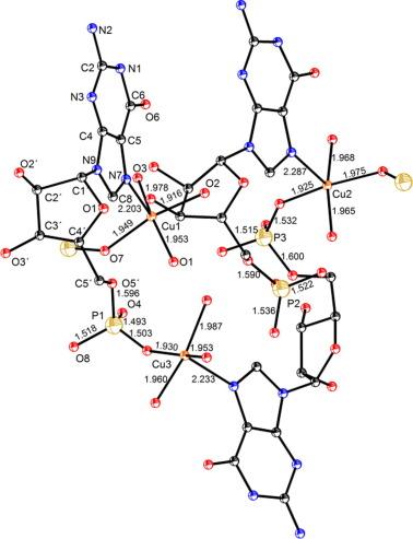 Metal Binding To Nucleic Acids