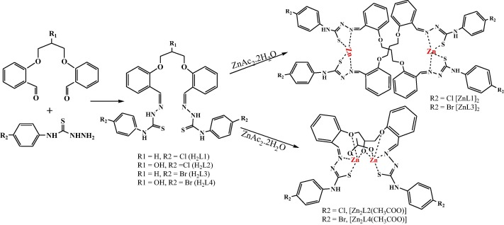 Binuclear Zincii Complexes Of N4 Substituted Bis
