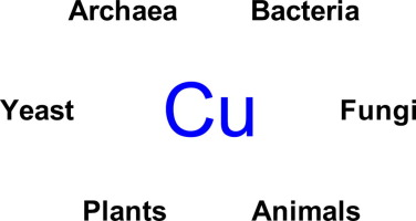 Cu in biology: Unleashed by O2 and now irreplaceable
