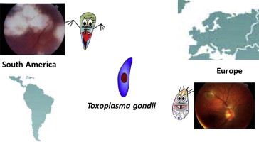 New clinical and experimental insights into Old World and