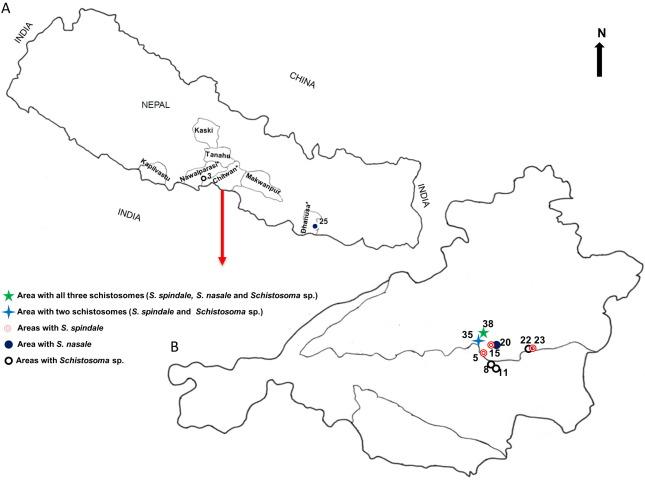 schistosomiasis nepal)