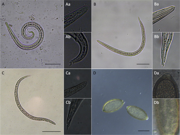 Lungworms and gastrointestinal parasites of domestic cats: a