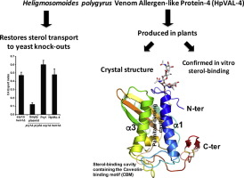 Heligmosomoides polygyrus Venom Allergen-like Protein-4