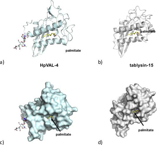 Heligmosomoides polygyrus Venom Allergen-like Protein-4 (HpVAL-4) is