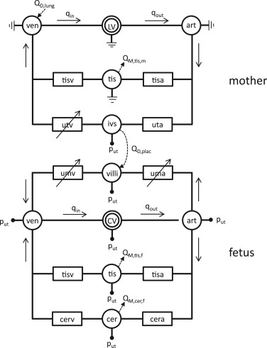 A Mathematical Model To Simulate The Cardiotocogram During Labor