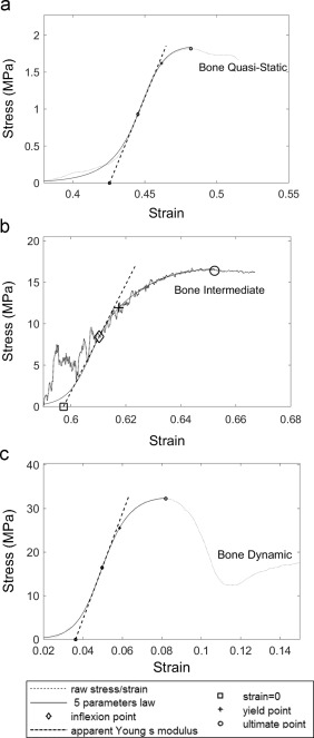 The behavior of cancellous bone from quasi-static to dynamic
