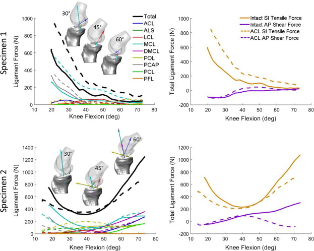 Combined measurement and modeling of specimen-specific knee