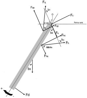 The effects of the antagonist muscle force on intersegmental loading free body diagram of the forces and anatomical parameters of the knee joint during isokinetic maximum efforts of knee extensors 0origin of the coordinate ccuart Image collections