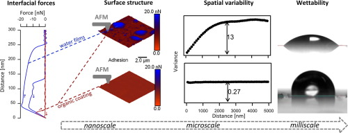 Atomic Force Microscopy in Adhesion Studies