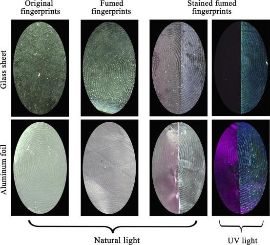 Fluorescence development of fingerprints by combining conjugated