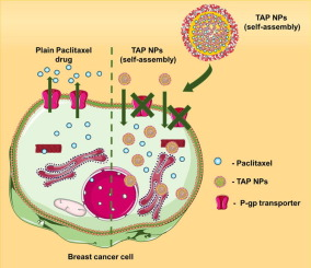 Tannic acid-inspired paclitaxel nanoparticles for enhanced