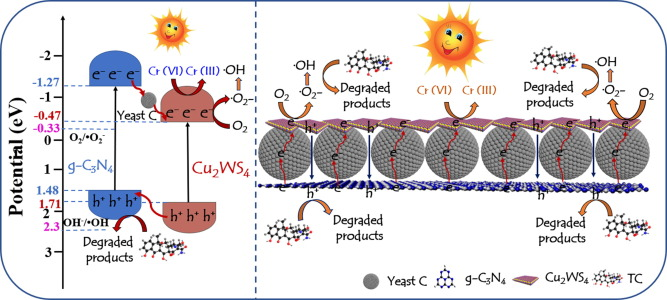 Yeast-derived carbon sphere as a bridge of charge carriers
