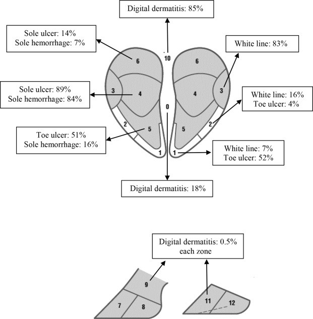 Prevalence and distribution of foot lesions in dairy cattle in ...