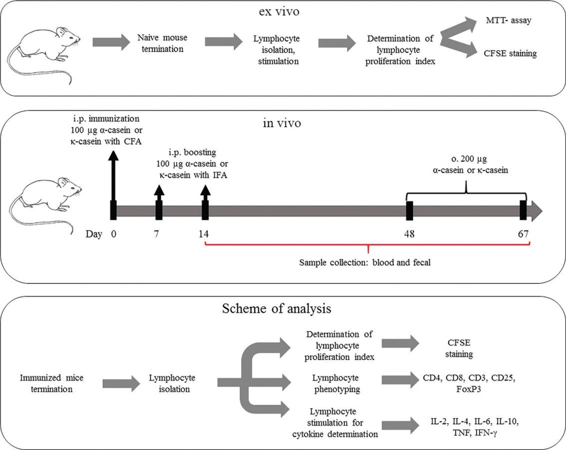 Immunoreactive properties of α-casein and κ-casein: Ex vivo and in