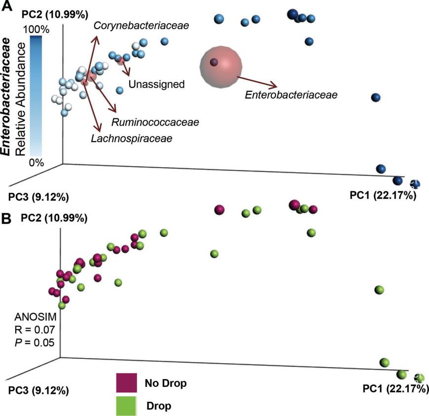 The microbiome of Escherichia coli and culture-negative