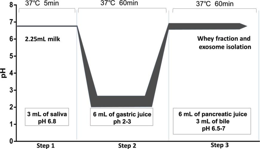 Exploration Of Long Noncoding RNA In Bovine Milk Exosomes