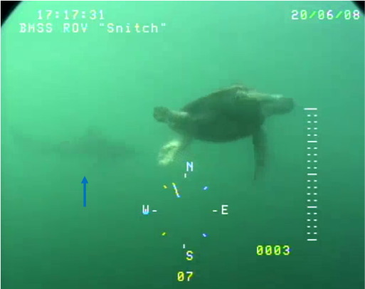 Using a remotely operated vehicle (ROV) to observe