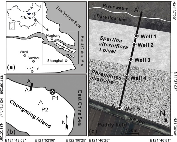 Tidal groundwater flow and its ecological effects in a