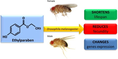 Ethylparaben Affects Lifespan Fecundity And The Expression Levels Of Err Ecr And Ypr In Drosophila Melanogaster Sciencedirect