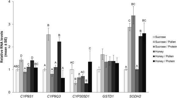 Genomic analysis of the interaction between pesticide